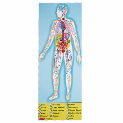 Human Anatomy Floor Puzzle - Double-Sided - 100 Pieces